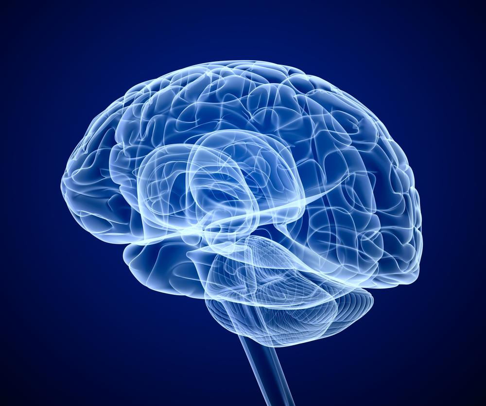 cerveau2