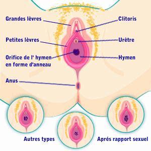 Sexe feminin sexe streming
