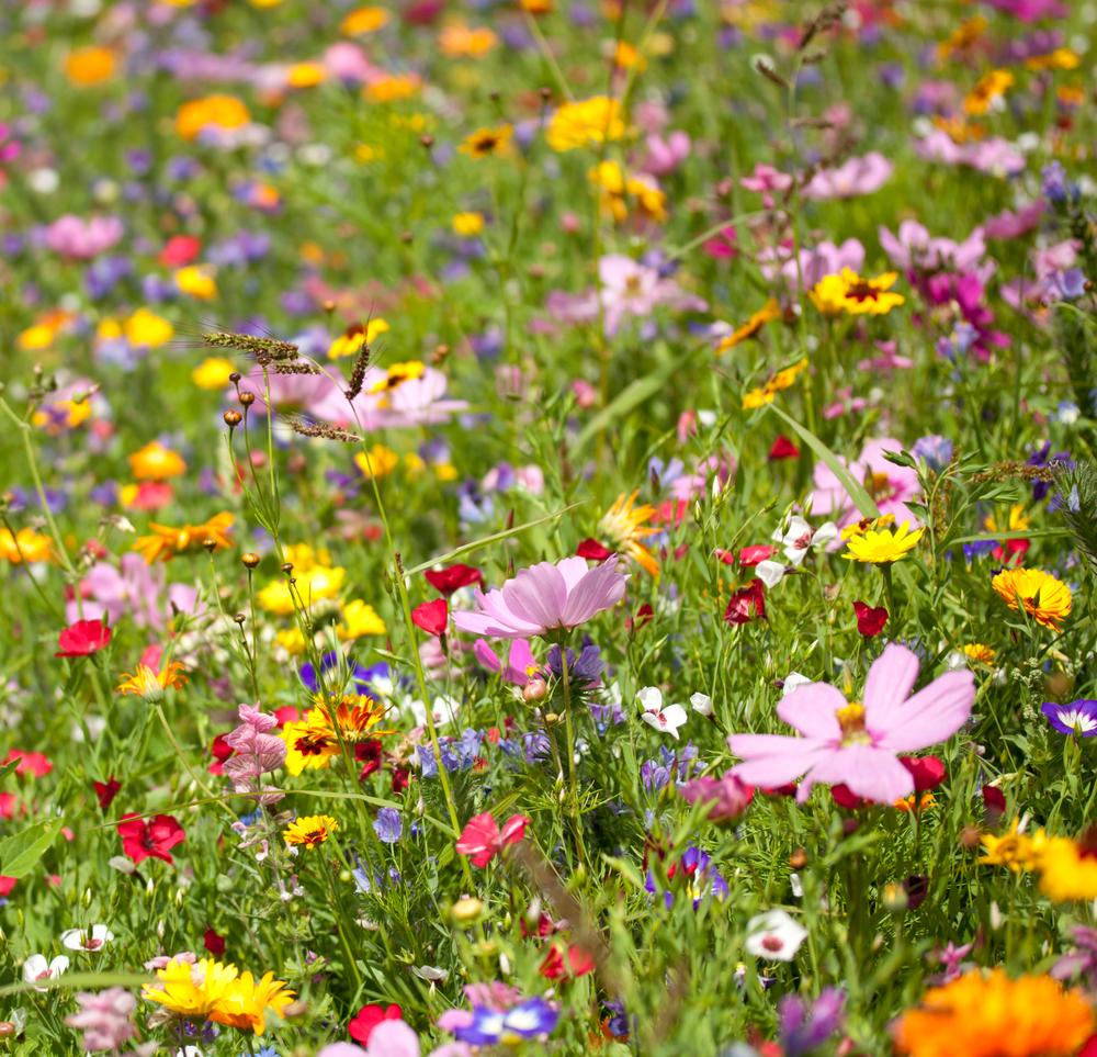 fleurs-d'été