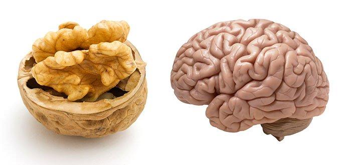 2. noix cerveau