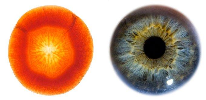 3. Carotte yeux