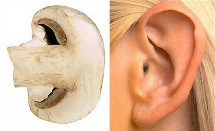 6. Champignon oreille