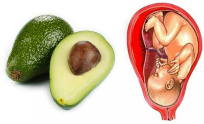 7. Avocat utérus
